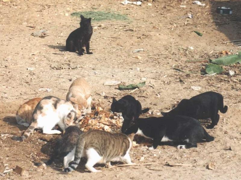 """تأجيل دعوى""""الرفق بالحيوان"""" لوقف قتل القطط وكلاب الشوارع.. تفاصيل"""